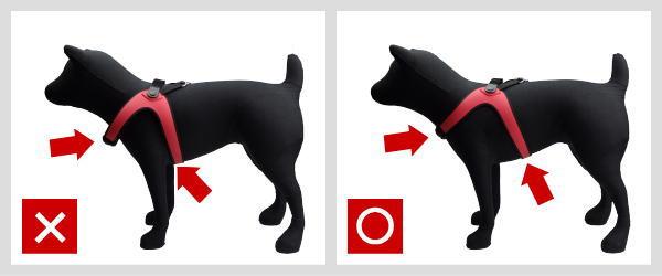 Sporza スポルツァ|フィッティングのコツ2|犬グッズ通販HAU