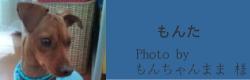 もんた|ビヨルキス ハーフチョークカラー BJORKIS|HAU ビヨルキス、北欧犬グッズ通販