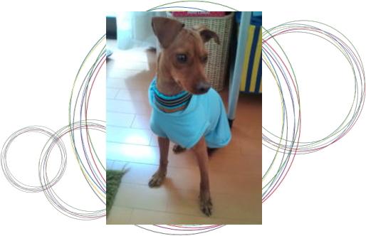もんた1|ビヨルキス ハーフチョークカラー BJORKIS|HAU ビヨルキス、北欧犬グッズ通販