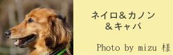 ネイロ&カノン&キャパ|ビヨルキス ハーフチョークカラー BJORKIS|HAU ビヨルキス、北欧犬グッズ通販