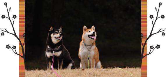 ねね&むさし1|リフレクティブロングリード15m Paw of Sweden|HAU ビヨルキス、北欧犬グッズ通販