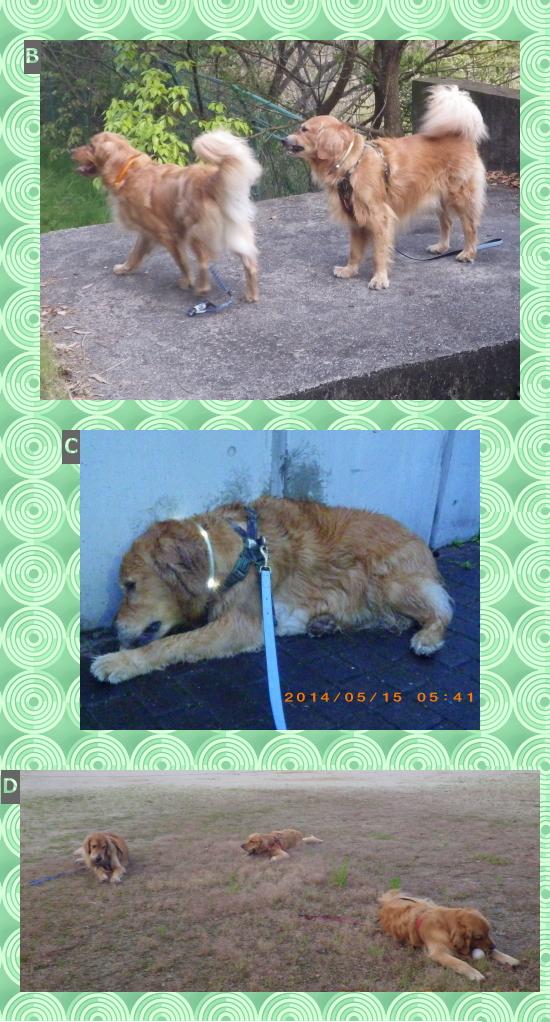 キング、ライル、ランディー2|犬グッズ通販HAU|LEUCHTIE