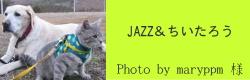JAZZ&ちいたろう|ビヨルキス ハーフチョークカラー BJORKIS|HAU ビヨルキス、北欧犬グッズ通販