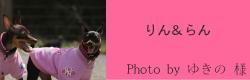 りん&らん|ビヨルキス ハーフチョークカラー BJORKIS|HAU ビヨルキス、北欧犬グッズ通販