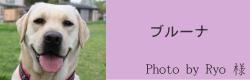 ブルーナ|ビヨルキス ハーフチョークカラー BJORKIS|HAU ビヨルキス、北欧犬グッズ通販