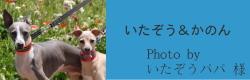 いたぞう&かのん|ビヨルキス ハーフチョークカラー BJORKIS|HAU ビヨルキス、北欧犬グッズ通販