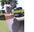 いたぞう&かのん3|ビヨルキス ハーフチョークカラー BJORKIS|HAU ビヨルキス、北欧犬グッズ通販