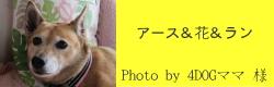 アース&花&ラン|ビヨルキス ハーフチョークカラー BJORKIS|HAU ビヨルキス、北欧犬グッズ通販
