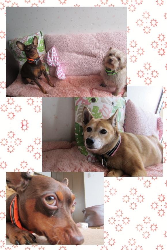 アース&花&ラン1|ビヨルキス ハーフチョークカラー BJORKIS|HAU ビヨルキス、北欧犬グッズ通販