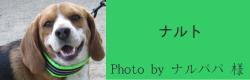 ナルト|ビヨルキス ハーフチョークカラー BJORKIS|HAU ビヨルキス、北欧犬グッズ通販