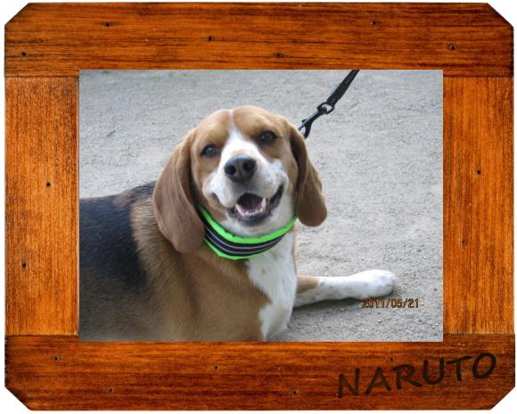 ナルト1|ビヨルキス ハーフチョークカラー BJORKIS|HAU ビヨルキス、北欧犬グッズ通販