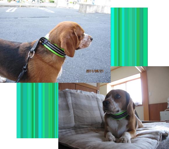 ナルト2|ビヨルキス ハーフチョークカラー BJORKIS|HAU ビヨルキス、北欧犬グッズ通販