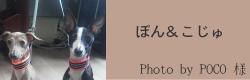 ぽん&こじゅ|ビヨルキス ハーフチョークカラー BJORKIS|HAU ビヨルキス、北欧犬グッズ通販