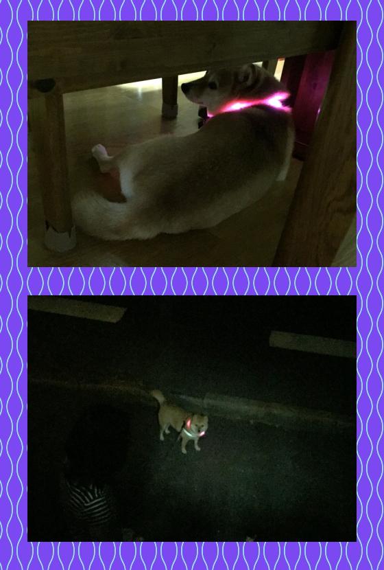 宙2|leuchtie ドッグライト| 犬グッズ通販HAU