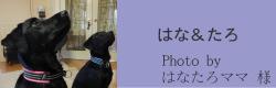 はな&たろ|ビヨルキス ハーフチョークカラー BJORKIS|HAU ビヨルキス、北欧犬グッズ通販