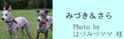 みづき&さら|ビヨルキス ハーフチョークカラー BJORKIS|HAU ビヨルキス、北欧犬グッズ通販