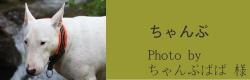 ちゃんぷ|ビヨルキス ハーフチョークカラー BJORKIS|HAU ビヨルキス、北欧犬グッズ通販
