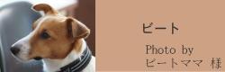 ビート|ビヨルキス ハーフチョークカラー BJORKIS|HAU ビヨルキス、北欧犬グッズ通販