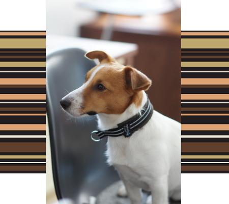 ビート1|ビヨルキス ハーフチョークカラー BJORKIS|HAU ビヨルキス、北欧犬グッズ通販