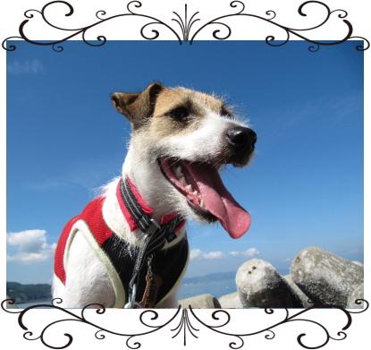 プリン1|ビヨルキス ハーフチョークカラー BJORKIS|HAU ビヨルキス、北欧犬グッズ通販