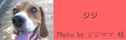 ジジ|ビヨルキス ハーフチョークカラー BJORKIS|HAU ビヨルキス、北欧犬グッズ通販