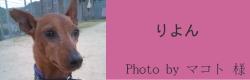 りよん|ビヨルキス ハーフチョークカラー BJORKIS|HAU ビヨルキス、北欧犬グッズ通販