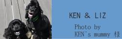 KEN&LIZ|ビヨルキス ハーフチョークカラー BJORKIS|HAU ビヨルキス、北欧犬グッズ通販