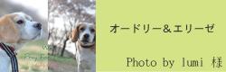 オードリー&エリーゼ|ビヨルキス ハーフチョークカラー BJORKIS|HAU ビヨルキス、北欧犬グッズ通販