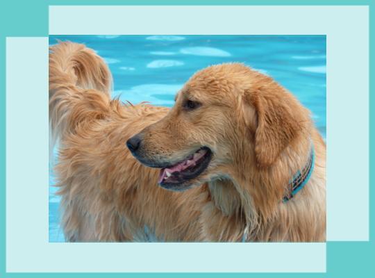 MAX1|ビヨルキス ハーフチョークカラー BJORKIS|HAU ビヨルキス、北欧犬グッズ通販