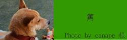 篤|ペブルブライツドッグカラー redhound (犬のレザー首輪) |犬グッズ通販HAU