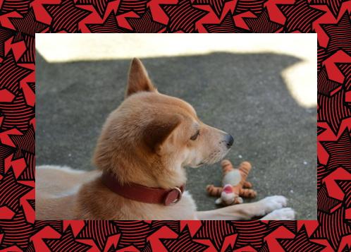 篤2|ペブルブライツドッグカラー redhound (犬のレザー首輪)|HAU ビヨルキス,北欧犬グッズ通販