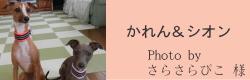 かれん&シオン|ビヨルキス ハーフチョークカラー BJORKIS|HAU ビヨルキス、北欧犬グッズ通販