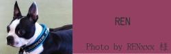 REN|ビヨルキス ロゴハーフチョークカラー BJORKIS|HAU ビヨルキス、北欧犬グッズ通販