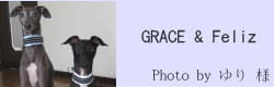 GRACE & Feliz|ビヨルキス ハーフチョークカラー BJORKIS|HAU ビヨルキス、北欧犬グッズ通販