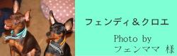 フェンディ&クロエ|ビヨルキス ハーフチョークカラー BJORKIS|HAU ビヨルキス、北欧犬グッズ通販