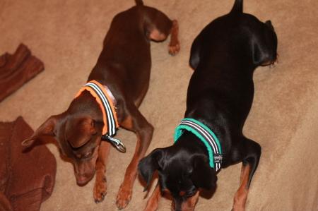 フェンディ&クロエ2|ビヨルキス ハーフチョークカラー BJORKIS|HAU ビヨルキス、北欧犬グッズ通販
