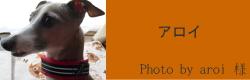 アロイ|ビヨルキス ハーフチョークカラー BJORKIS|犬グッズ通販HAU