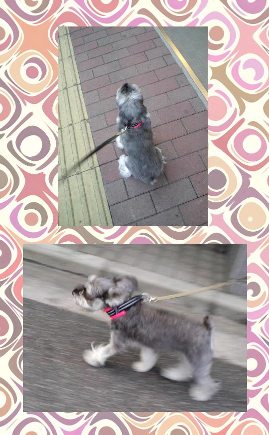 JOY2|ビヨルキス ハーフチョークカラー BJORKIS|HAU ビヨルキス、北欧犬グッズ通販