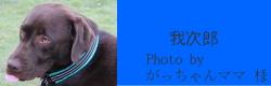 我次郎|ビヨルキス ハーフチョークカラー BJORKIS|犬グッズ通販HAU