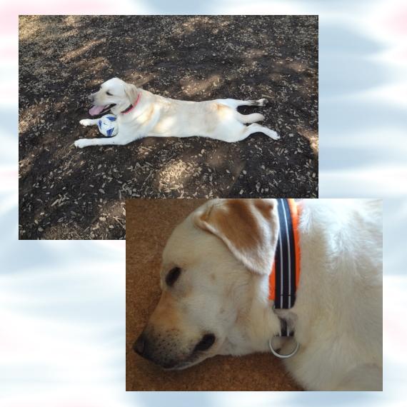 そら2|ビヨルキス ハーフチョークカラー BJORKIS|HAU ビヨルキス、北欧犬グッズ通販