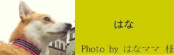 はな|ビヨルキス ナイロンリード BJORKIS|HAU ビヨルキス、北欧犬グッズ通販