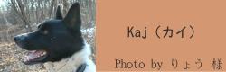 Kaj(カイ)|ビヨルキス ハーフチョークカラー BJORKIS|HAU ビヨルキス、北欧犬グッズ通販