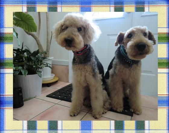 エル&ハリー1|ビヨルキス ロゴハーフチョークカラー BJORKIS|HAU ビヨルキス、北欧犬グッズ通販