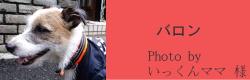 バロン|ビヨルキス ハーフチョークカラー BJORKIS|HAU ビヨルキス、北欧犬グッズ通販