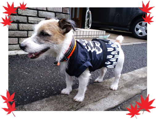 バロン1|ビヨルキス ハーフチョークカラー BJORKIS|HAU ビヨルキス、北欧犬グッズ通販