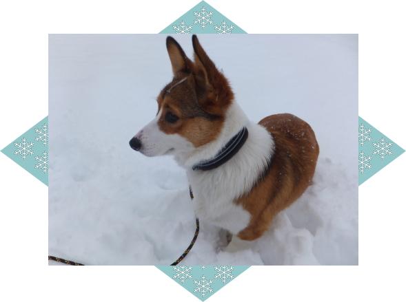 ルチア(LUCIA)1|ビヨルキス ハーフチョークカラー BJORKIS|HAU ビヨルキス、北欧犬グッズ通販