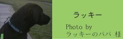 ラッキー|リフレクティブロングリード15m Paw of Sweden|HAU ビヨルキス、北欧犬グッズ通販