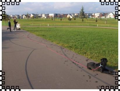 写真1|リフレクティブロングリード15m Paw of Sweden|HAU ビヨルキス、北欧犬グッズ通販