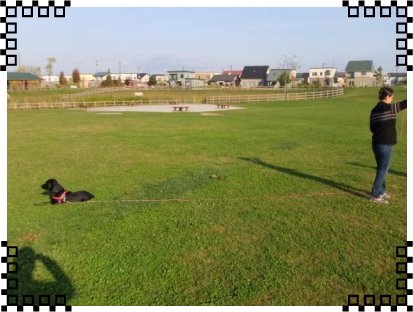写真2|リフレクティブロングリード15m Paw of Sweden|HAU ビヨルキス、北欧犬グッズ通販