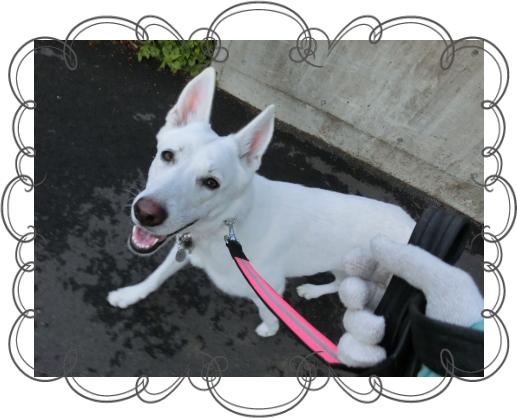 ハヤン2|HAU ビヨルキス、北欧犬グッズ通販